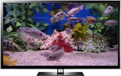 TV aquarium video