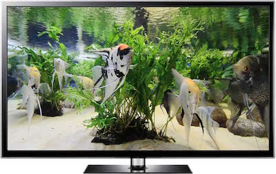 Angel Fish Video Screensaver