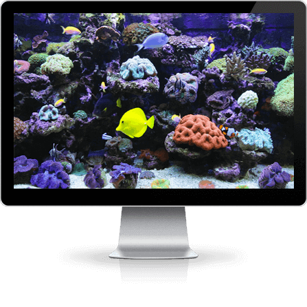 aquarium screensaver downloads