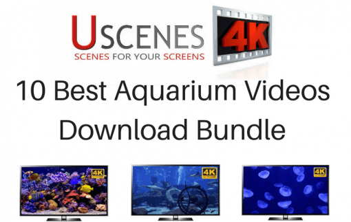 Best 4K Aquarium Videos Download Bundle